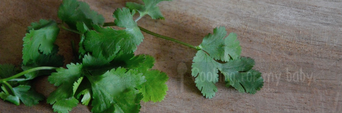 Fresh coriander for baby