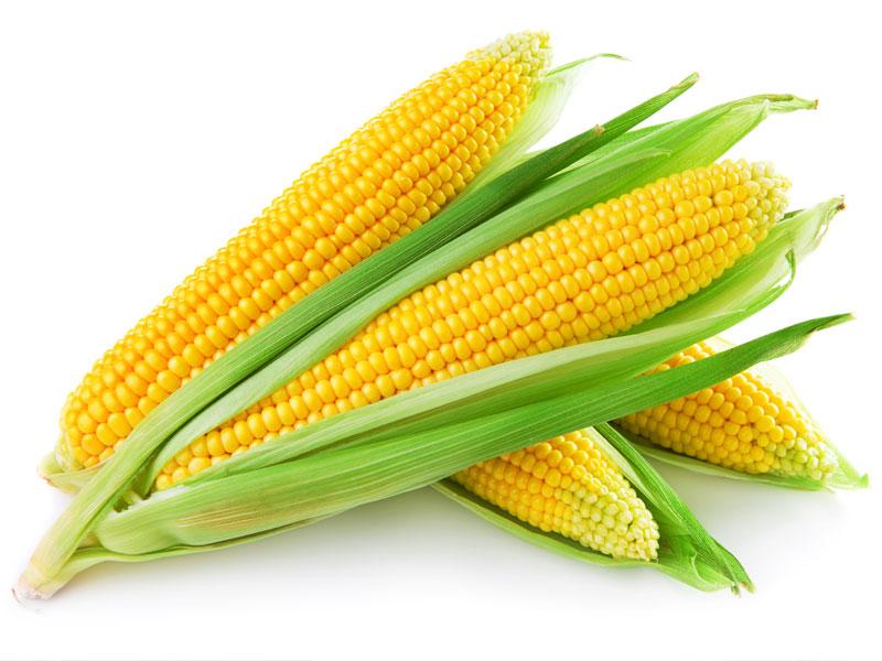 Maïs (6 mois)