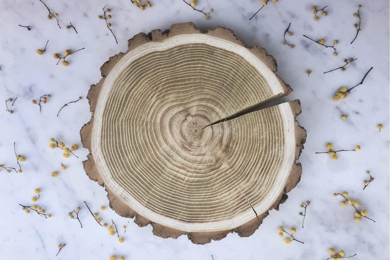 Knieja wood - Rondin de bois en acacia