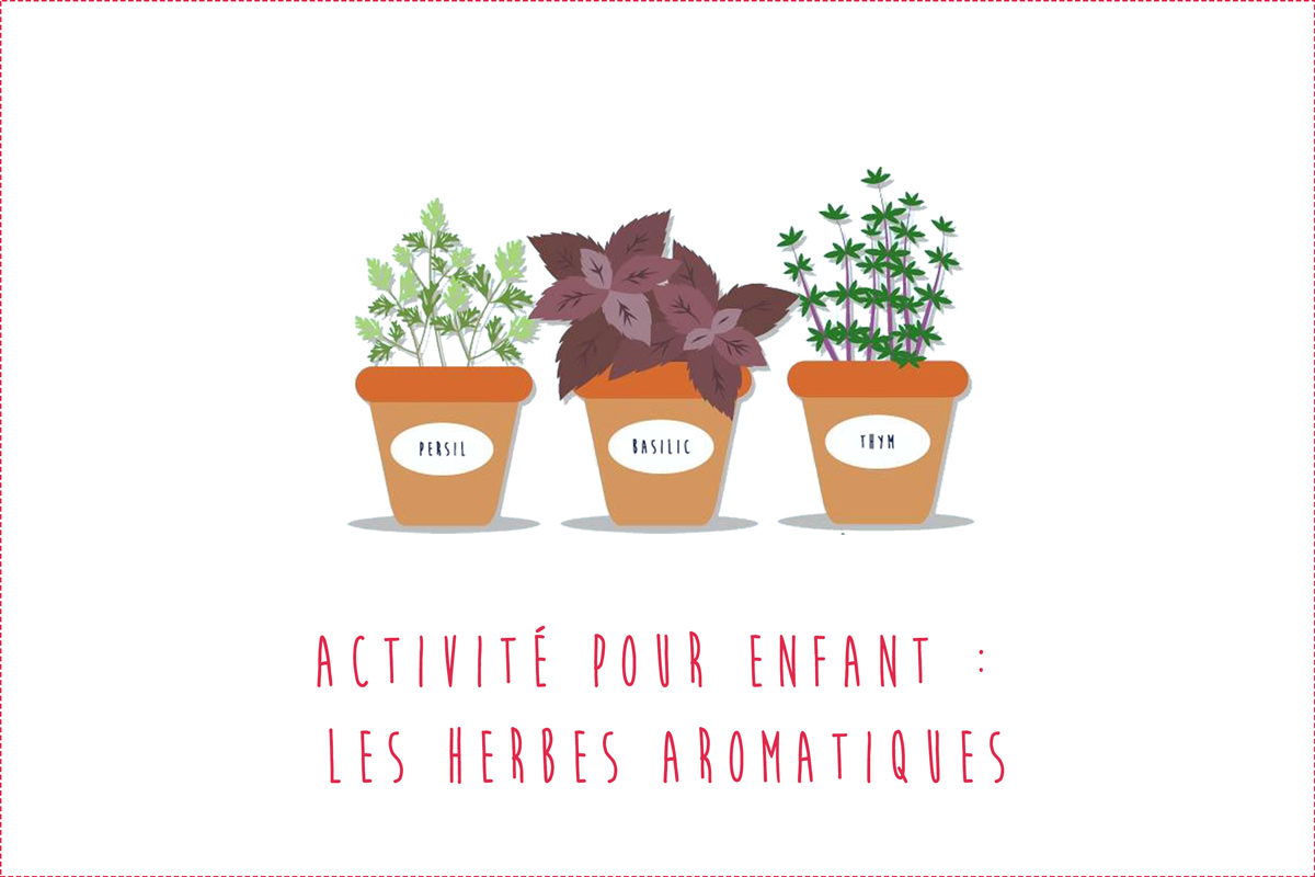 Activité autour des herbes aromatiques pour bébé et enfant